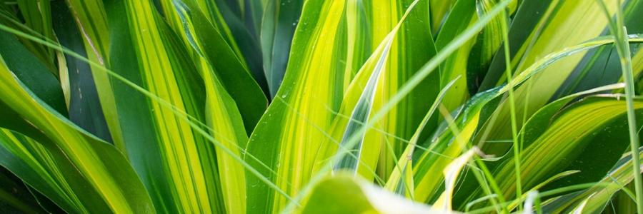 plantas verdes de interior, mejores plantas de interior
