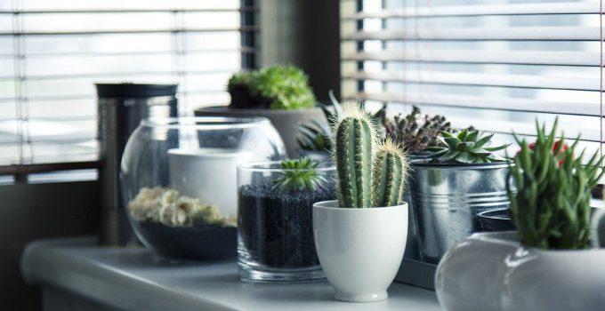 mejores plantas de interior duraderas, plantas de interior duraderas fotos, plantas duraderas para interior, plantas fuertes de interior, plantas fuertes y resistentes